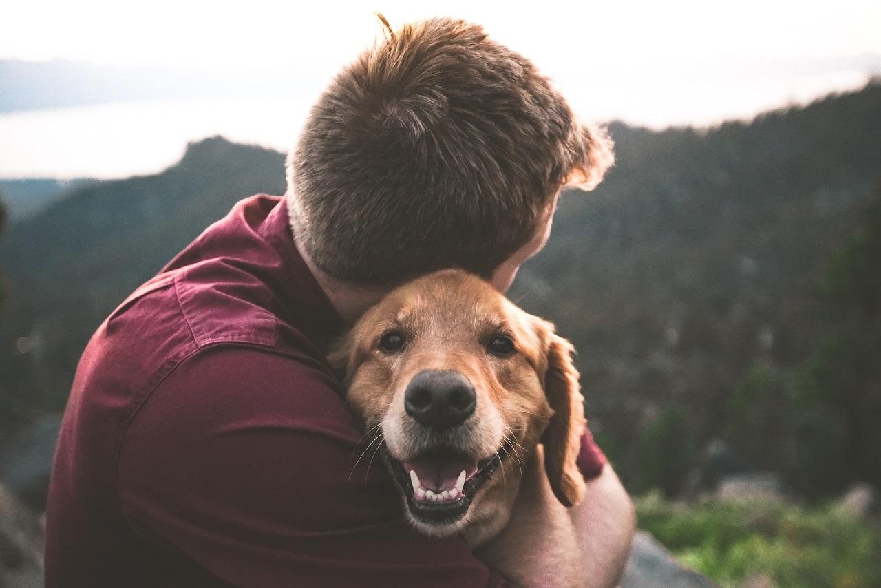 Żywienie psa – co musisz wiedzieć