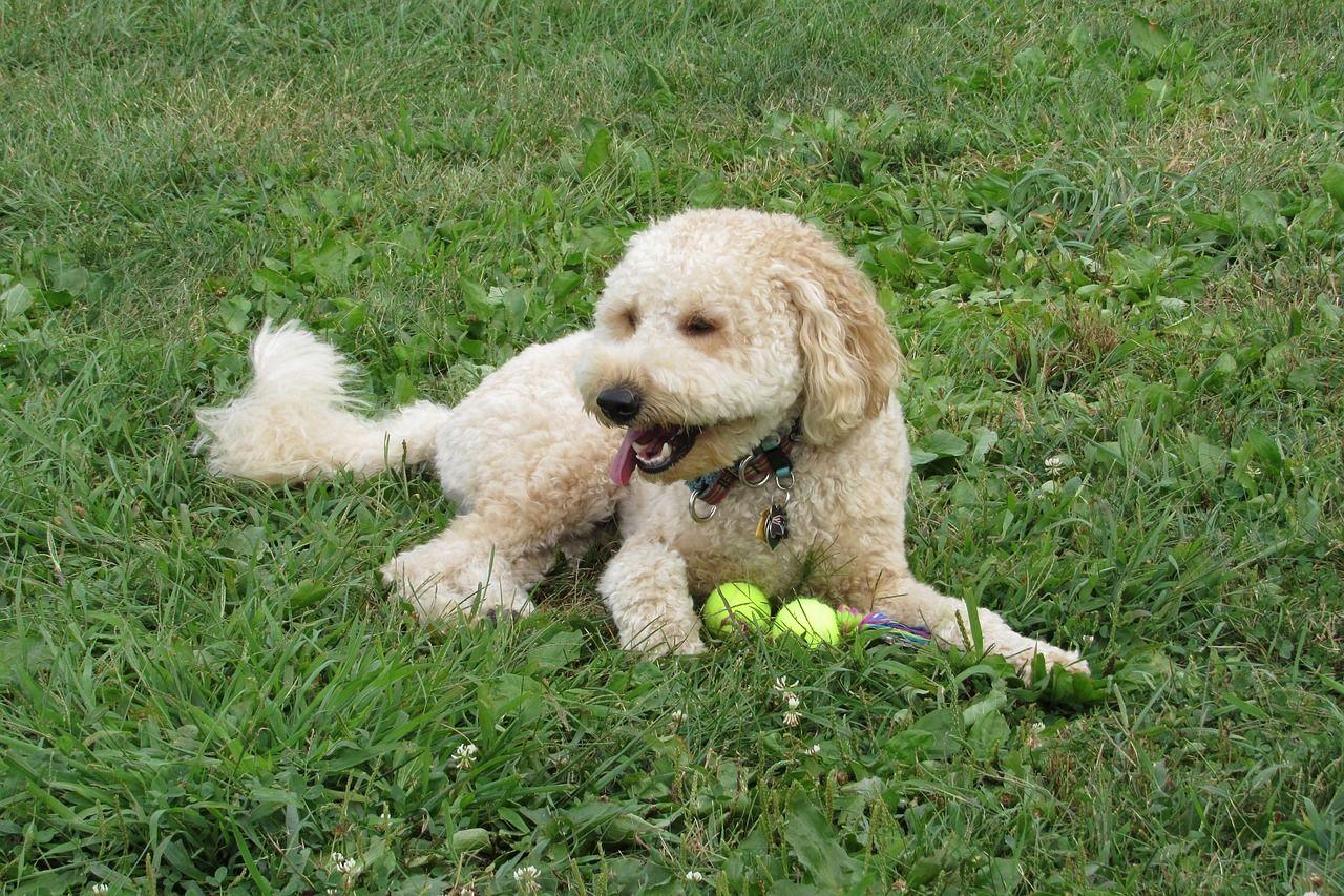 Co brać pod uwagę przy wyborze akcesoriów dla psa?