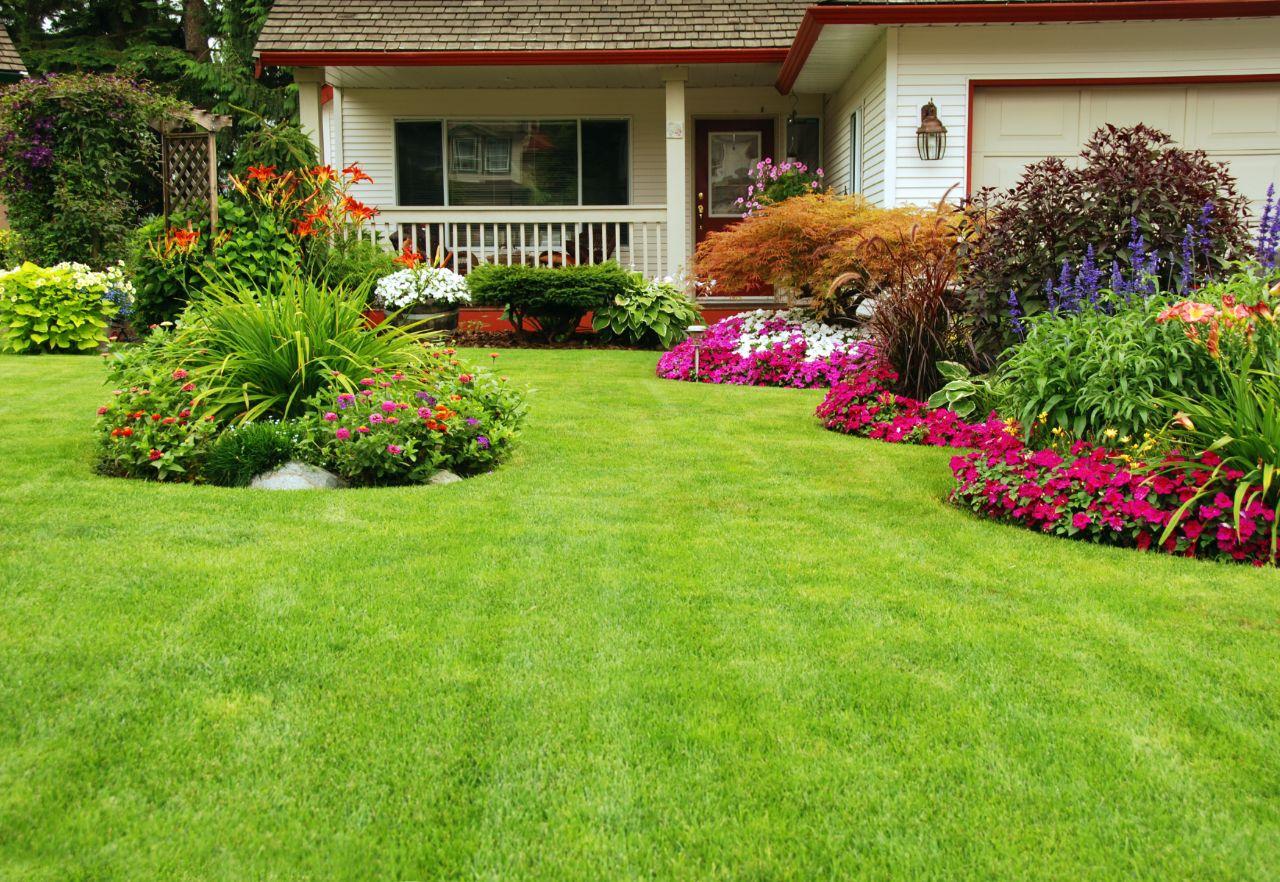 Jak pozbyć się kreta z ogródka?